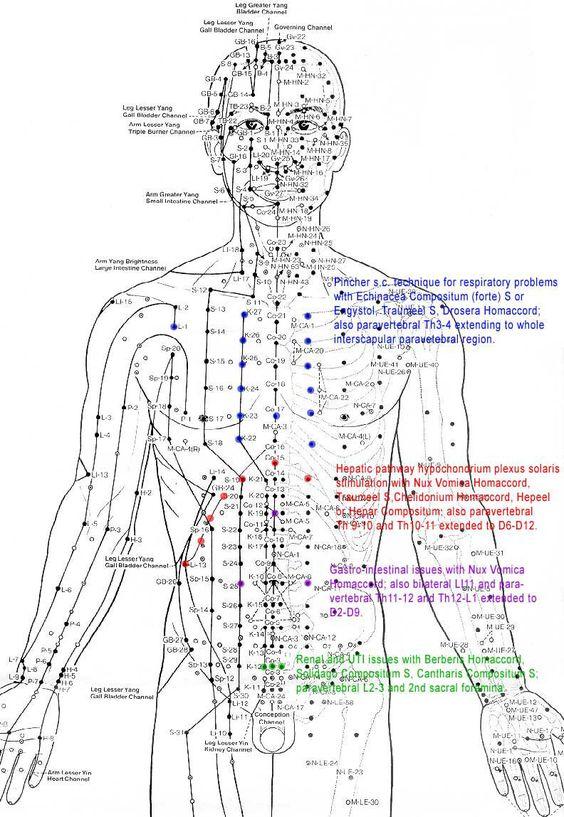 Meridian in the human body