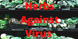 herbs for coronavirus or covid-19
